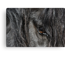 Stallion Canvas Print