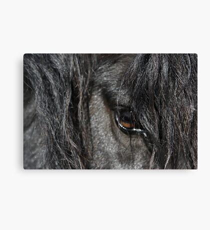 Stallion Canvas Print