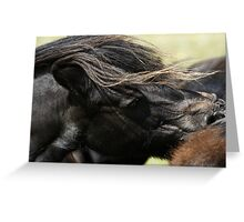 Shetland Ponies Greeting Card