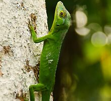 Green Lizard by Ilana Brumble