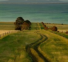Spray Farm Lane,Bellarine Peninsula by Joe Mortelliti