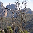 Half Way up to &#x27;High Tops&#x27; Warrumbungles. N.S.W. by Rita Blom