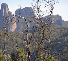 Half Way up to 'High Tops' Warrumbungles. N.S.W. by Rita Blom