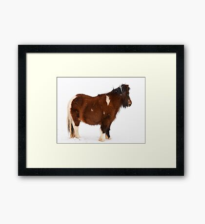 Pony in the Snow Framed Print