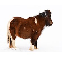 Pony in the Snow Photographic Print