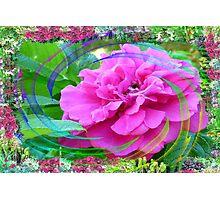 Rose Swirl In My Flower Garden Photographic Print