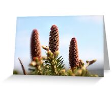 Juvenile pine cones Greeting Card