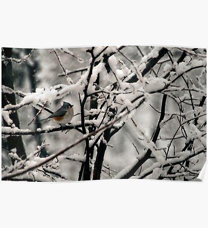 Wet Snow, Black Bough Poster