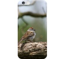 Chipping Sparrow in Tree iPhone Case/Skin