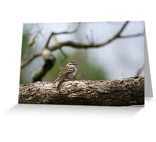 Chipping Sparrow in Tree Greeting Card