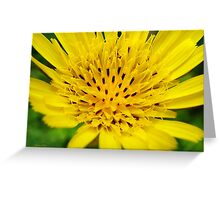 Yellow Salsify Flower Greeting Card