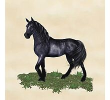 A Black Horse Called Star Photographic Print
