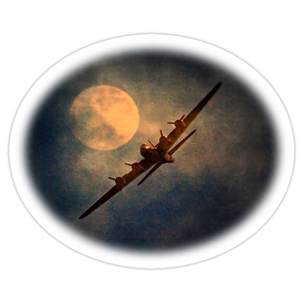 Night Flight - New Products by naturelover