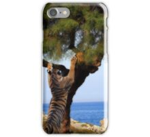 The scratching post iPhone Case/Skin