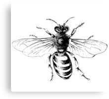 Black and White Honey Bee  Canvas Print
