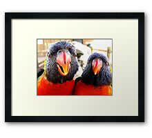Rainbow Lorikeets ~ All beak & In your Face! Framed Print