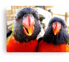 Rainbow Lorikeets ~ All beak & In your Face! Canvas Print
