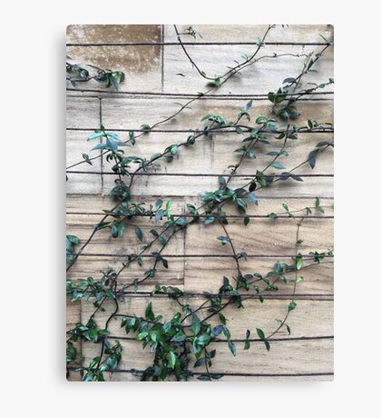 leaves growing up a wall Canvas Print