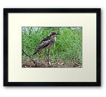 Bush Elegance Framed Print