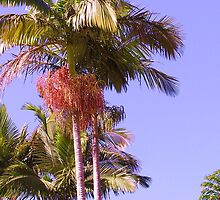 Bangalow Palms in fruit  by Virginia McGowan