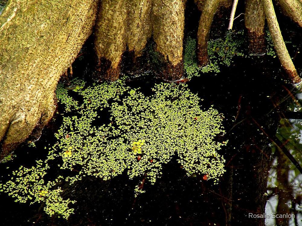 New Growth in the Dark Swamp by Rosalie Scanlon