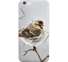 Solitary Redpoll Bird iPhone Case/Skin