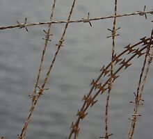 barb wire by Gnangarra