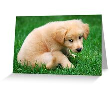 Fuzzy Golden Retriever Puppy Greeting Card