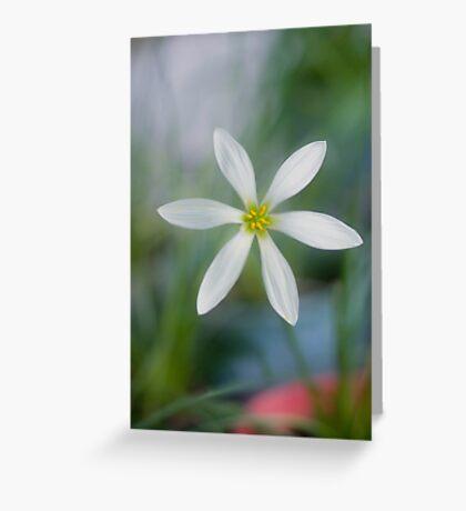Rain Lilly - Jacques coffee plantation Mareeba  Greeting Card