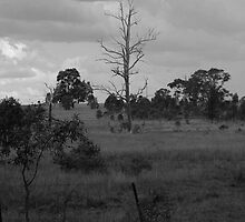 lonely tree by michellew