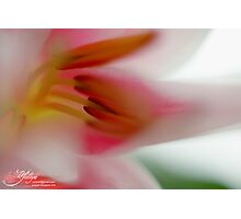 Dreaming about Spring Photographic Print
