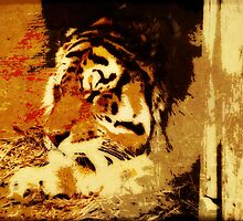 tiger at rest by Lenore Locken
