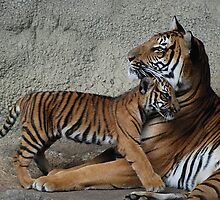 Momma Loves Me by Kathy Newton