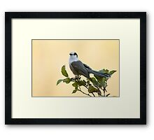 Gray Jay Framed Print