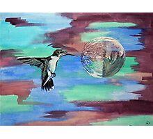 Hummingbird II Photographic Print