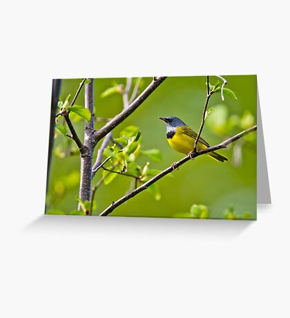 Mourning Warbler Greeting Card