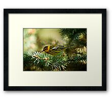 Cap May Warbler Framed Print