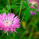 Pink  Blossom by EUNAN SWEENEY