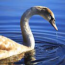 Young  Swan by EUNAN SWEENEY