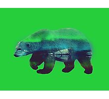 Brother Bear Koda. Photographic Print