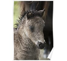 Foal Poster