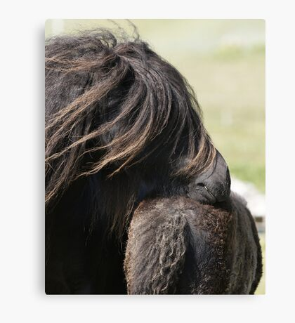 Shetland Mare and Foal Canvas Print
