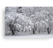 Snow Storm in NJ Canvas Print