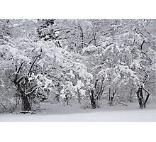 Snow Storm in NJ Photographic Print