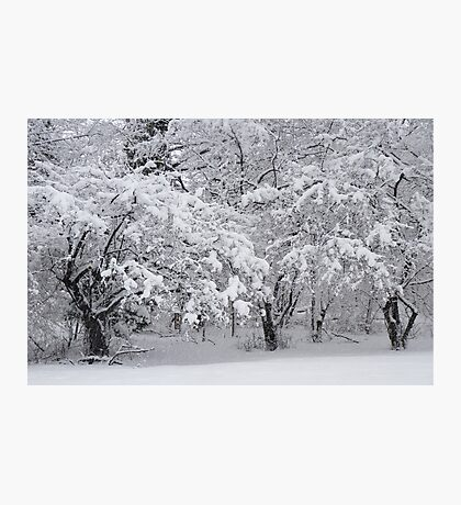 Snow Storm in NJ Photographic Print