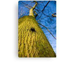 The Tree, Preston Nature Reserve, England Canvas Print
