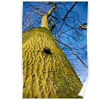 The Tree, Preston Nature Reserve, England Poster