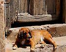 Dog on doorstep, Trinidad, Cuba by David Carton