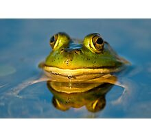 Pond Frog Photographic Print