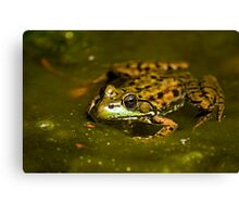 Leopard Frog Canvas Print